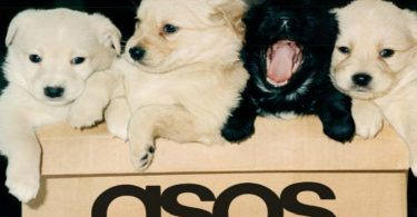 Dogs and asos delivery package