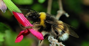 bumblebee, climate, economy, science, Victoria Blake, Kettle Mag